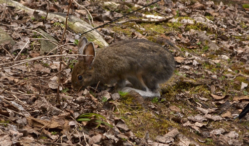 The first-night campsite was apparently a major meeting ground for the island's hares.
