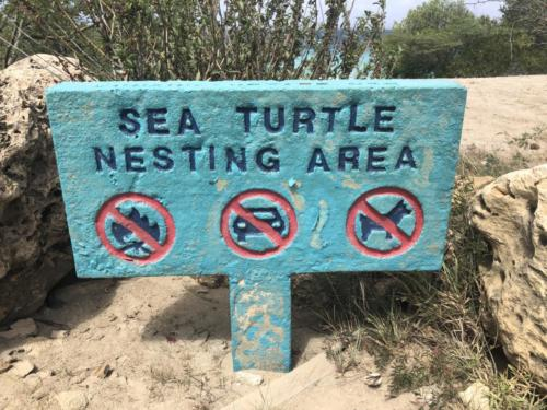 Sea turtles! They nest here.