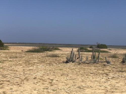 Desert island vegetation.