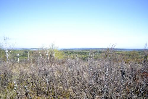 North, toward Canada.