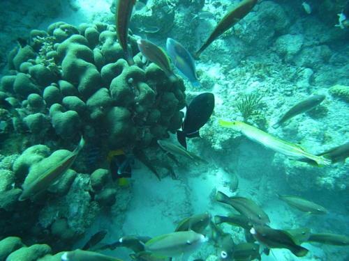 Buddy's Reef, central leeward coast. Unfiltered.