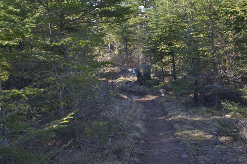 The trail, easy to find for once.