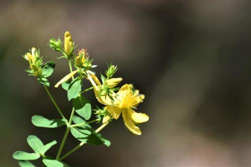A yellow flower.