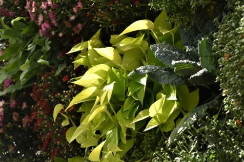 shaded-plants