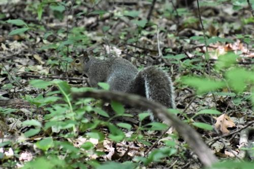 A squirrel in the forest, acting squirrely.