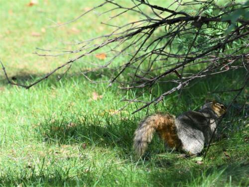 squirrel (1)