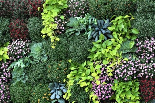 wall-o-plants